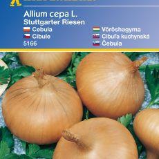 Cibule Stuttg.obrovská - semena cibule