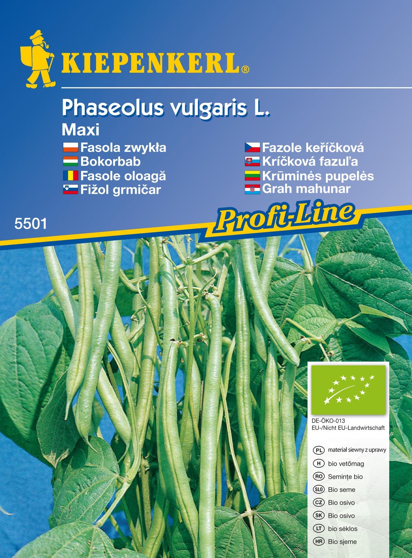 Keříčková fazole Maxi BIO - semena bio fazole