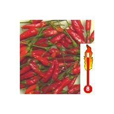 Chilli Malaga Bird (rastlina: capsicum) - semená chilli 7 ks