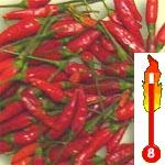 Chilli Malaga Bird (rostlina: capsicum) – semena chilli 7 ks