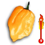 Chilli Big Sun (rostlina: capsicum) – semena chilli 7 ks