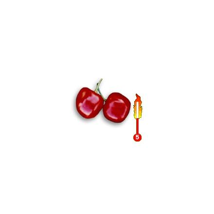 Chilli Baby Pepper (rostlina: capsicum) – semena chilli 7 ks