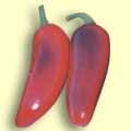 Chilli Maxi-Jala (rostlina: capsicum) – semena chilli 7 ks