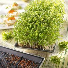 Miniset pro rostlinné klíčky + bio semínka řeřichy 2x 5g