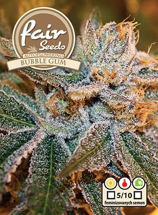 Bubble Gum Auto - 5 autoflowering semen Fair Seeds