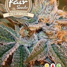 Bubble Gum Auto - 10 autoflower semen Fair Seeds