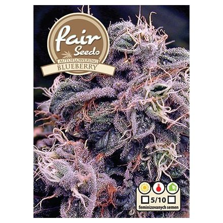 Auto Blueberry - 10 autoflower semen Fair Seeds