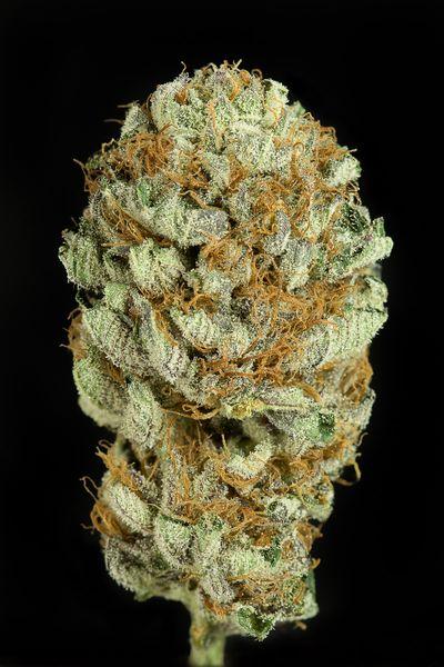 Blue Kush - feminizované semienka 5ks Dinafem