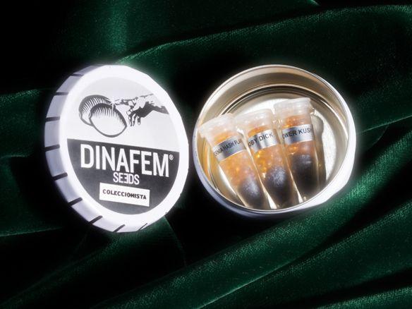 Collector Mix 2 - feminizované semienka 6ks Dinafem