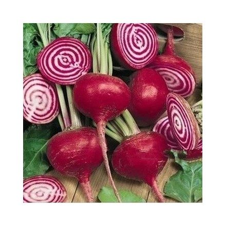 Řepa Chioggia organic (Beta vulgaris ) cca 20 semen