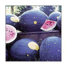 Meloun Moon&Stars - Cherokee (Citrullus lanatus ) cca 10 semen