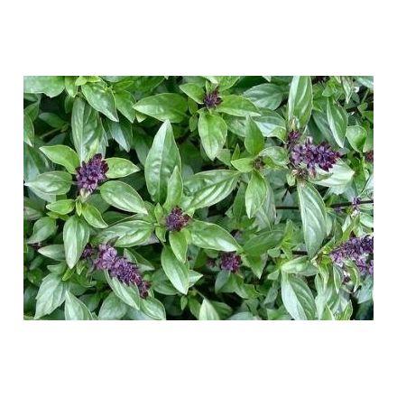 Bazalka Cinnamon - skořicová (Ocium gratissimum ) cca 20 semen
