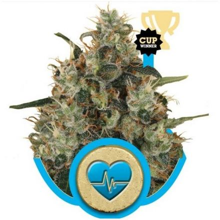 Medical Mass - feminizovaná semínka 3 ks Royal Queen Seeds