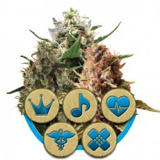 CBD Mix - feminizovaná semínka 3ks Royal Queen Seeds
