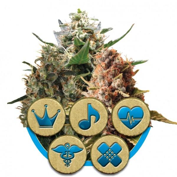 CBD Mix - feminizovaná semínka 5 ks Royal Queen Seeds