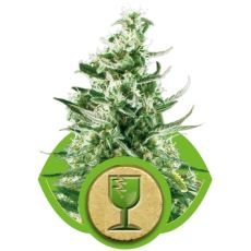 Royal Critical Automatic - fem. a samonakvétací semínka 5ks Royal Queen Seeds