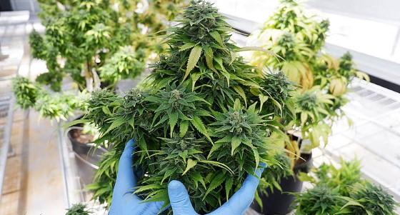 Díky zaštipování lze docílit i takovýchto krásné bohatých rostlin, zdroj: hortibiz.com