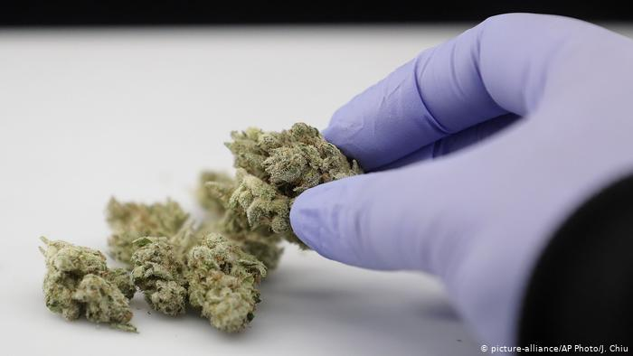 CBDH nový kanabinoid