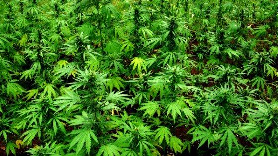 Liečebne kanabinoidy