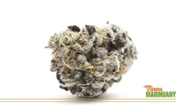 cbg kanabinoid konope