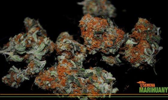 léčebné konopí marihuana v práci