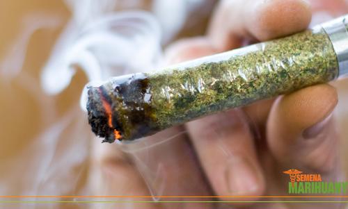 závislost na marihuaně