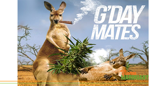 austrálie konope marihuana