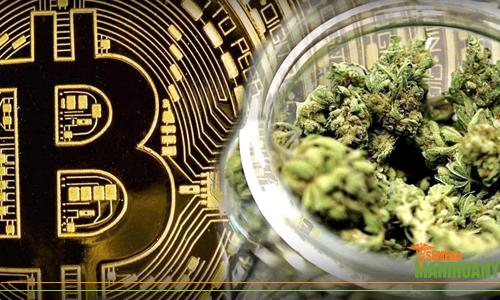 bitcoin investice konopí