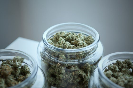 cbd, odrůdy konopí, druhy marihuany, thc, léčba cbd