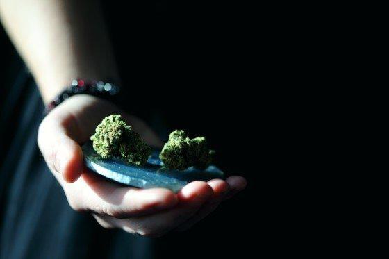 dávkování, cbd, thc, konopí, marihuana, léčba,