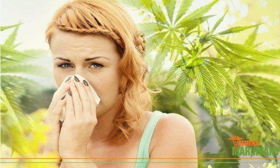 Alergie na konopí
