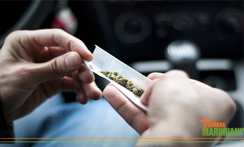 řízení pod vlivem marihuany postih