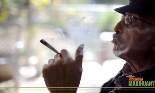 konope marihuana starí ludia