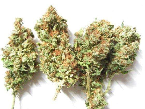sušená marihuana G13