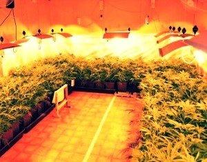 Pestovanie marihuany pre lekárske účely