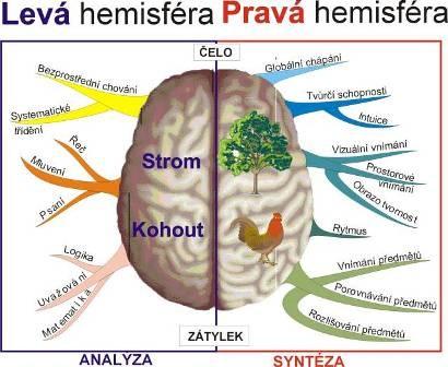 Rozdělení na pravou a levou hemisféru