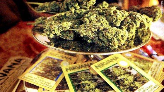 Výber marihuany je naozaj široký