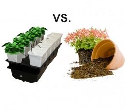 Hydroponie vs. substrát