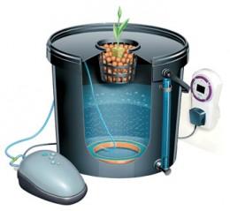 Záklaní typy hydroponického pěstování