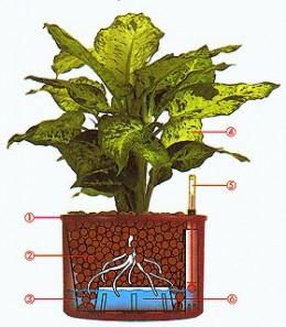 Ako pestovať hydroponicky