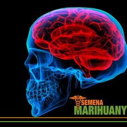 Léčebné Konopí a léčba Mozkových nádorů