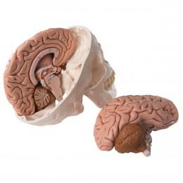 Konope ako liek pri poranení mozgu