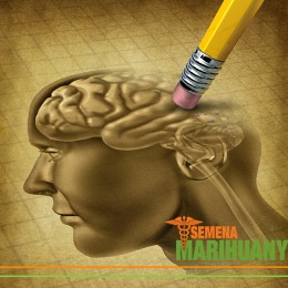 Nová štúdia účinku THC na pamäť