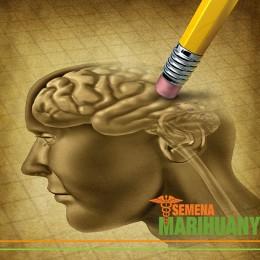 Nová studie účinku THC na paměť