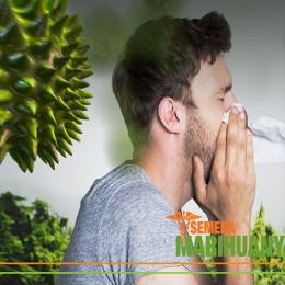 Alergie na léčebné konopí