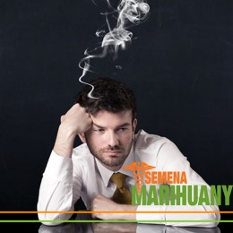 Léčebné konopí snižuje pracovní neschopnost