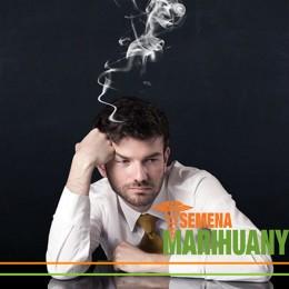 Liečebné konope znižuje pracovnú neschopnosť