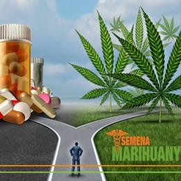 Liečebné Konope a Boj proti Opiátovej Epidémii