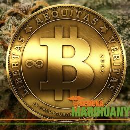 Konope, Bitcoin a Budúcnosť
