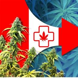 Za lacnejším kanabisom do lekárne - simulujú Kanaďania u doktora?